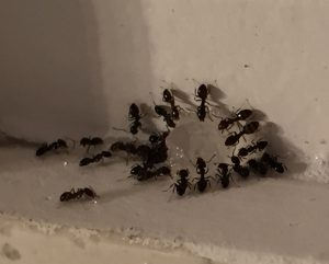 Ant Eradication Service